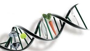o-metabolismo-e-a-influencia-genetica